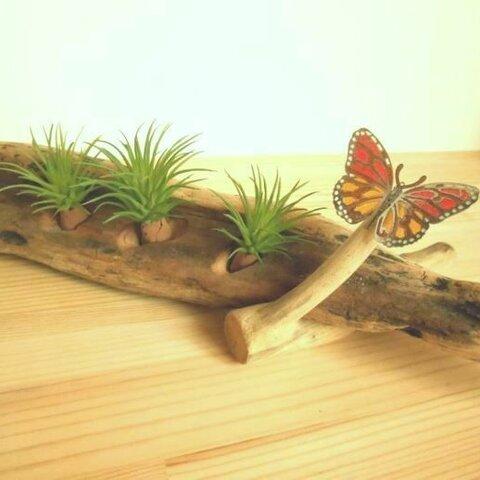 【温泉流木】ステンドグラス風のチョウがとまるグリーンスタンド エアープランツスタンド 流木インテリア