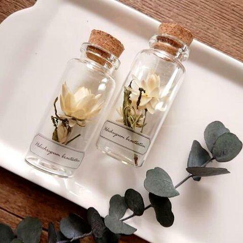 植物標本 Botanical Collection■No.1 ヘリクリサム アイボリー