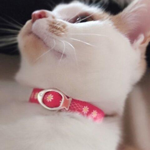 猫の首輪 小花マーガレット(チェリーピンク)