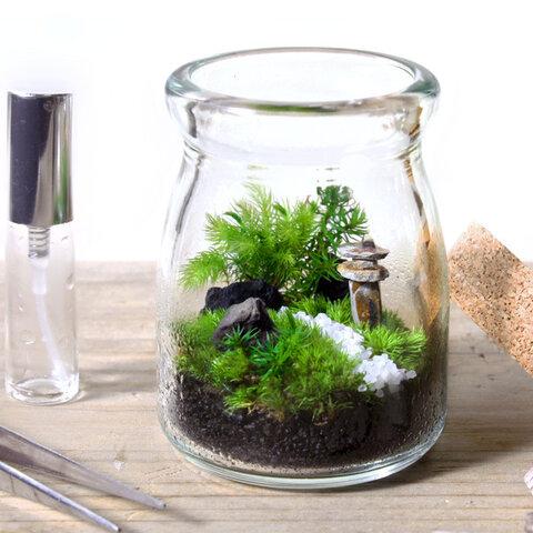 苔庭テラリウム手作りキット