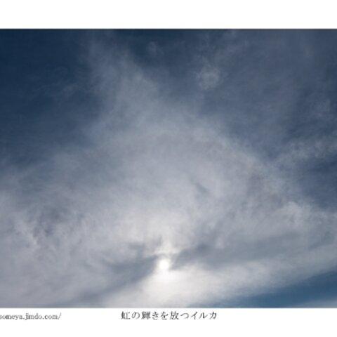 写真ポストカードNo.15「虹の輝きを放つイルカ」【選べる3枚】