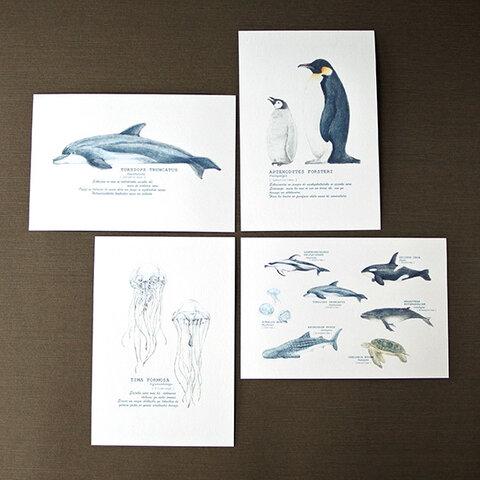 海の生き物たちのポストカード4種セット