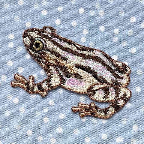 アップリケワッペン セネガルガエル UI  蛙 W-2045 フロッグ かえる