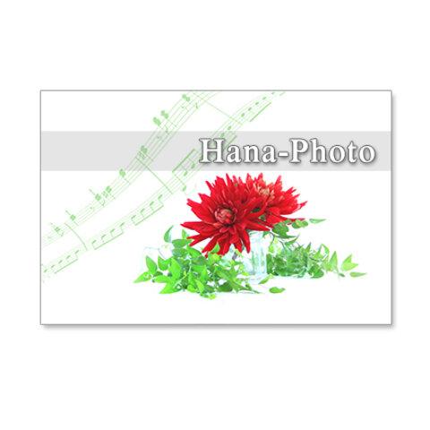 1248)スマイラックスと真っ赤なダリヤ     ポストカード5枚組