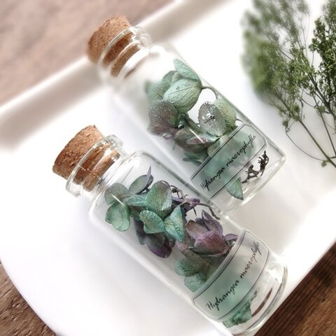 植物標本 Botanical Collection■No.3-C 紫陽花 ブルーパープル
