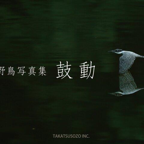 野鳥写真集 -鼓動-
