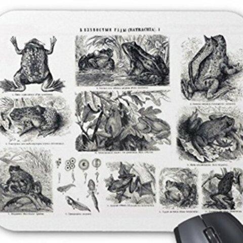 カエルのイラストのマウスパッド:フォトパッド(世界のカエルシリーズ)