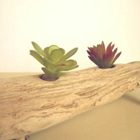 【温泉流木】白い海流木に2つの緑のグリーンスタンド エアープランツスタンド 流木インテリア