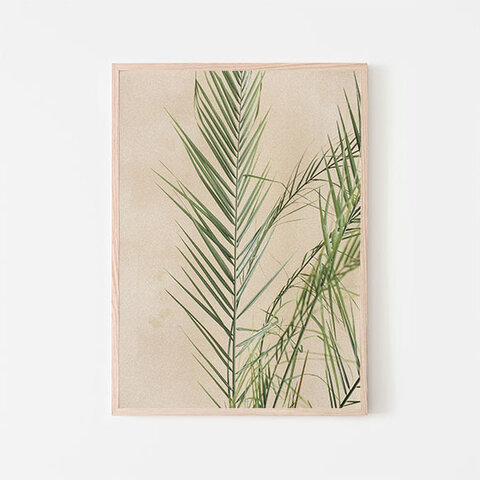 エキゾチックでトロピカルなヤシの葉 / アートポスター 写真 ミニマル カラー 白黒 植物 パーム 影 夏 自然