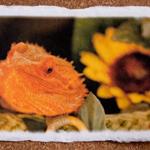 トカゲ☆手漉き和紙アート写真インテリア★トカゲとひまわり★浮かせ台付き・送料無料(ハガキ・A4・A3ノビサイズ)